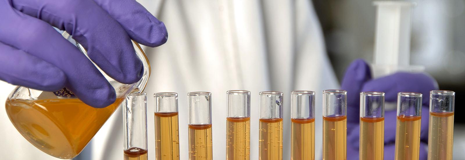 Photograph of scientist pouring colored liquid into row of test tubes.